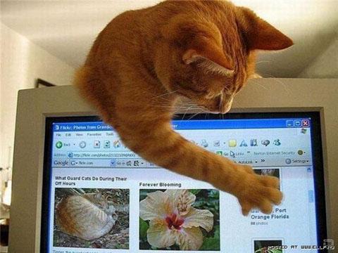 Кіт веб-майстер
