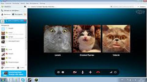 Skype cat